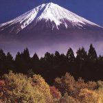 日本のライセンス更新方法の問題点:資金調達への影響